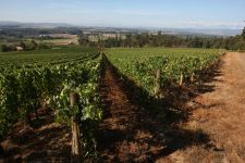 Stoller Vineyards lies on the edge of the Dundee Hills AVA. Photo by Rockne Roll